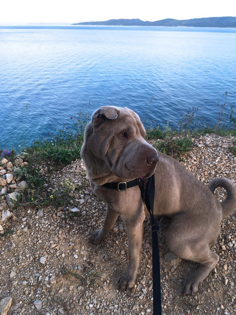 Dog on Croatia beach