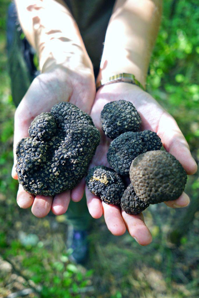 Black Istrian truffles
